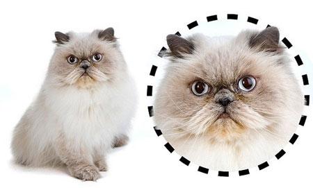 ネコは顔の形で「性格」がわかる!▽はやんちゃ○は内気2