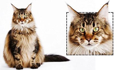 ネコは顔の形で「性格」がわかる!▽はやんちゃ○は内気3