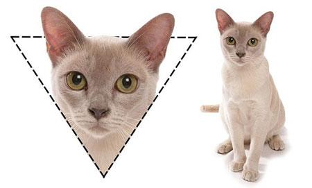 ネコは顔の形で「性格」がわかる!▽はやんちゃ○は内気4
