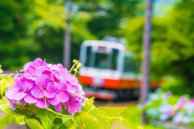 彼氏と箱根デート♡ラブラブな旅行にするために行きたいおすすめスポットとは?
