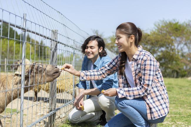 動物園デートを成功させる秘訣とは?1画像