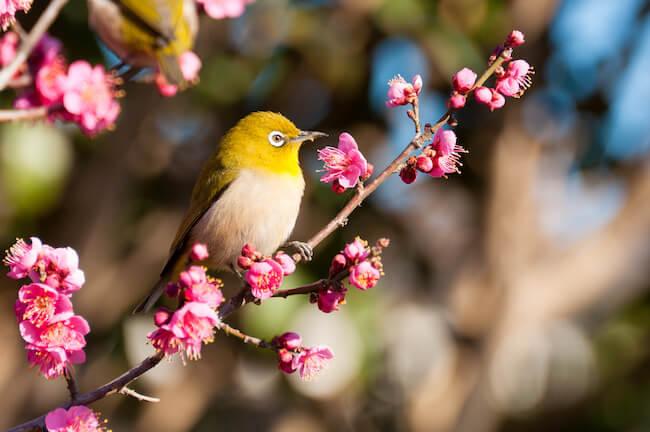 桜より一足お先に♡都内でまったり梅のお花見デートスポット!