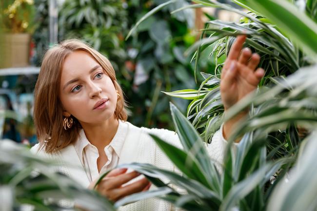 ストレス緩和だけじゃない!?置くだけで恋愛がうまくいく観葉植物